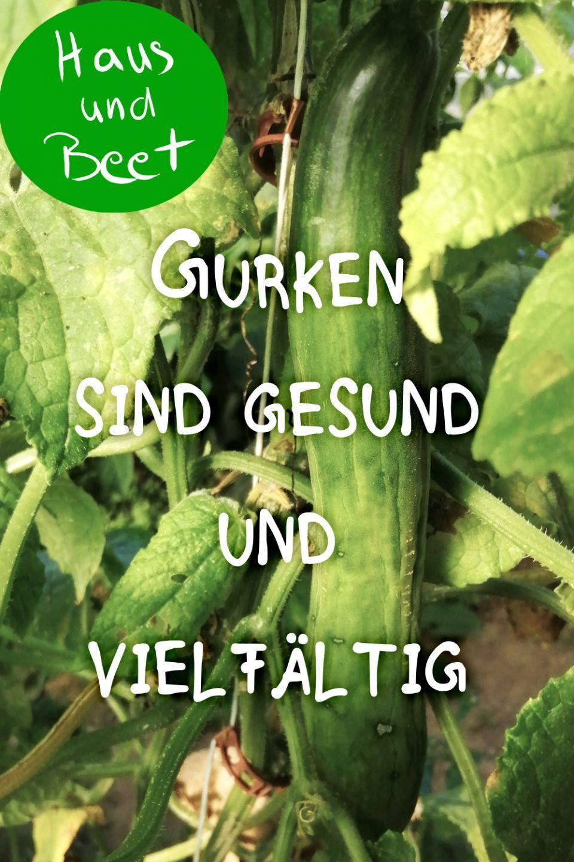 Gurke Gemuse Aus Deinem Garten Und Balkon In 2020 Gemuse Anbauen Gemusegarten Anlegen Pflanzplan