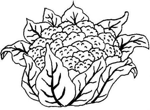 Coliflor çizim Yiyecek