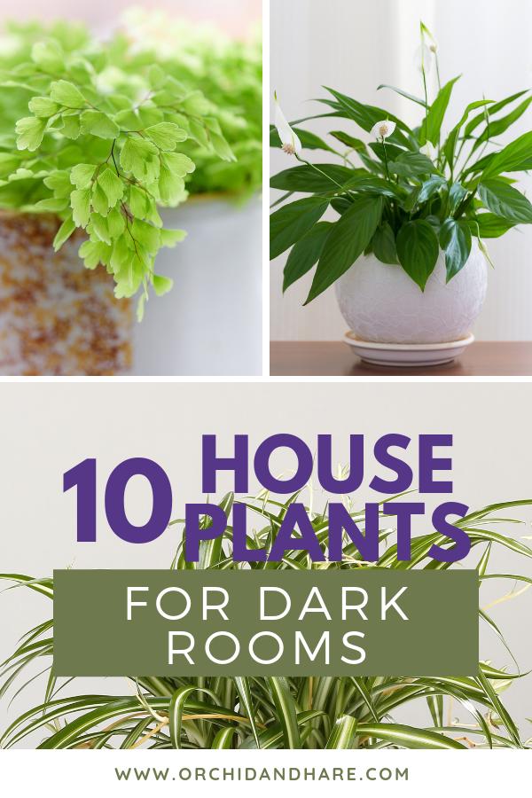 10 Low Light House Plants House Plants Plants Best 400 x 300