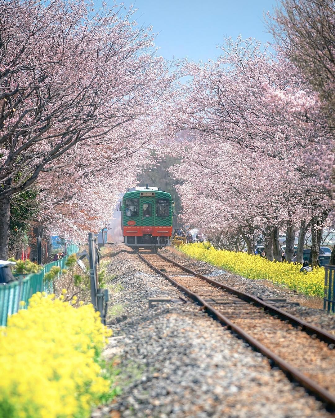 Japan Travel Moka In Tochigi Prefecture Is One Of The Lesser Known Sakura Spots With A Cherr Cherryblossom I Japan Travel Japan Train Japan Vacation