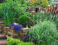 Garden on a hillside. Склон с террасами. Проект
