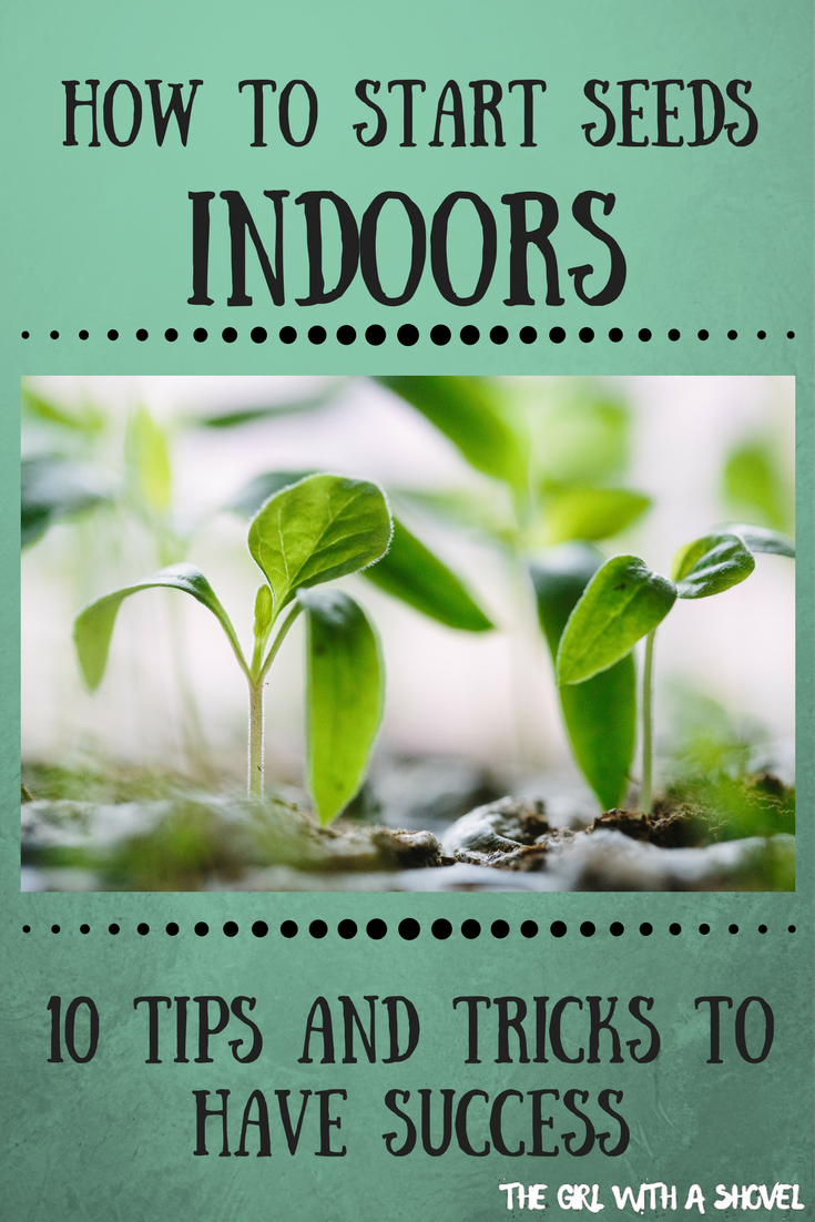 How to Start Seeds Indoors: 10 Tips to have Success #howtogrowplants