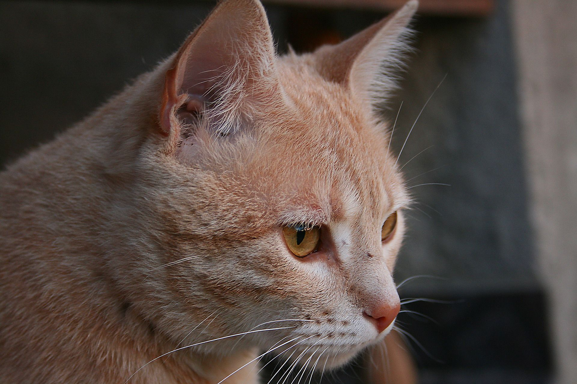 What a wonderful ginger kitty kitty cat ginger (With