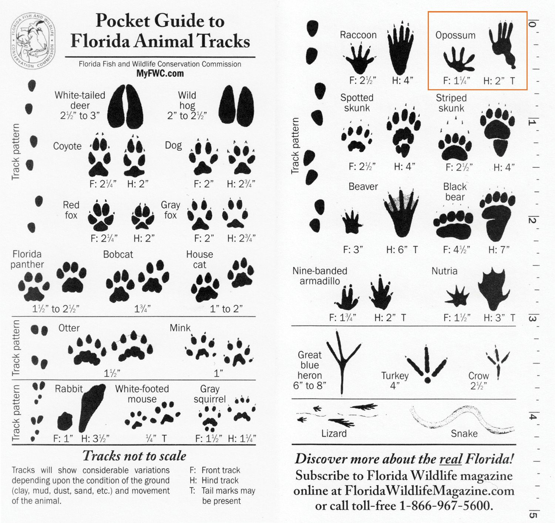 How to Identify Animal Tracks