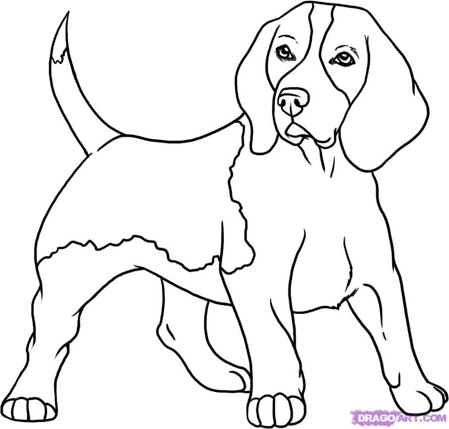 How To Draw A Beagle Step By Step Drawing Guide By Darkonator
