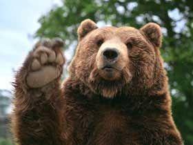 bear screensavers waving bear
