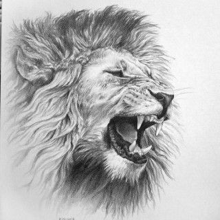 Awesome Drawings Of Lions Roaring Lion Pencil Drawing On