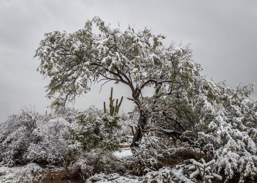 Snow blankets Arizona desert, creating otherworldly scenes