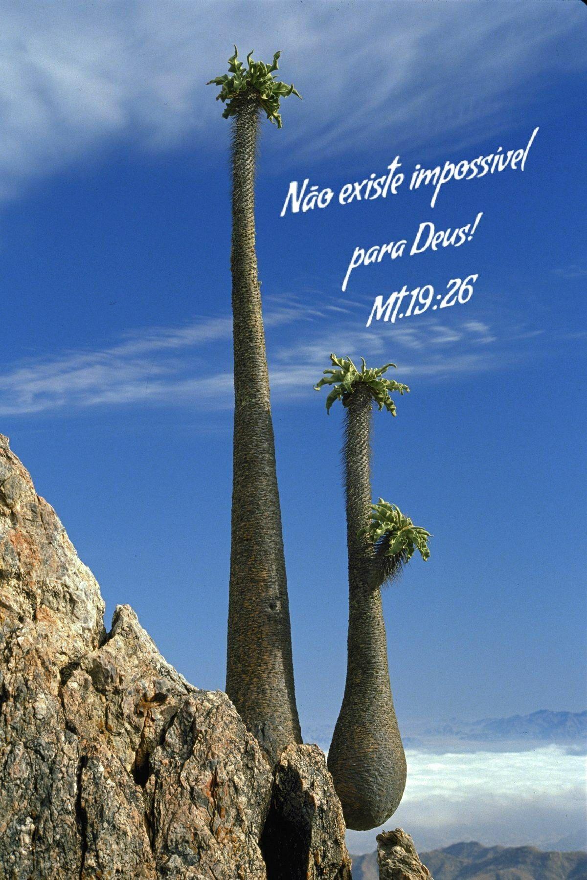 Pin by Sylvia Calderon Lopez on Arizona Weird trees