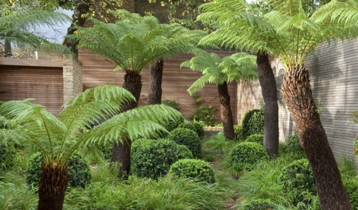 Fern Garden Ideas 10 garden ideas to steal from london tree fern fern and 10 garden ideas to steal from london gardenista workwithnaturefo