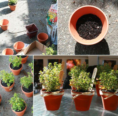 herbs in terracotta pots cute garden themed baby shower favors