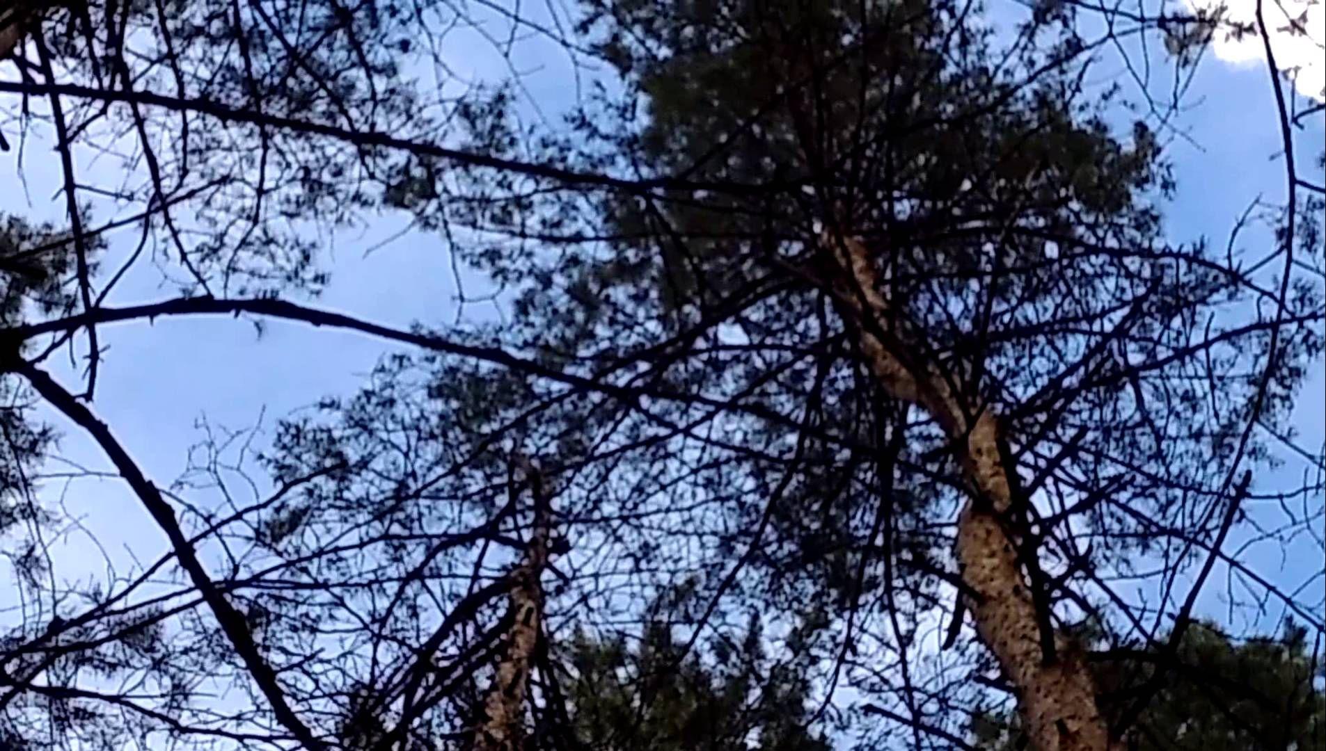 Скачать звуки стука по дереву
