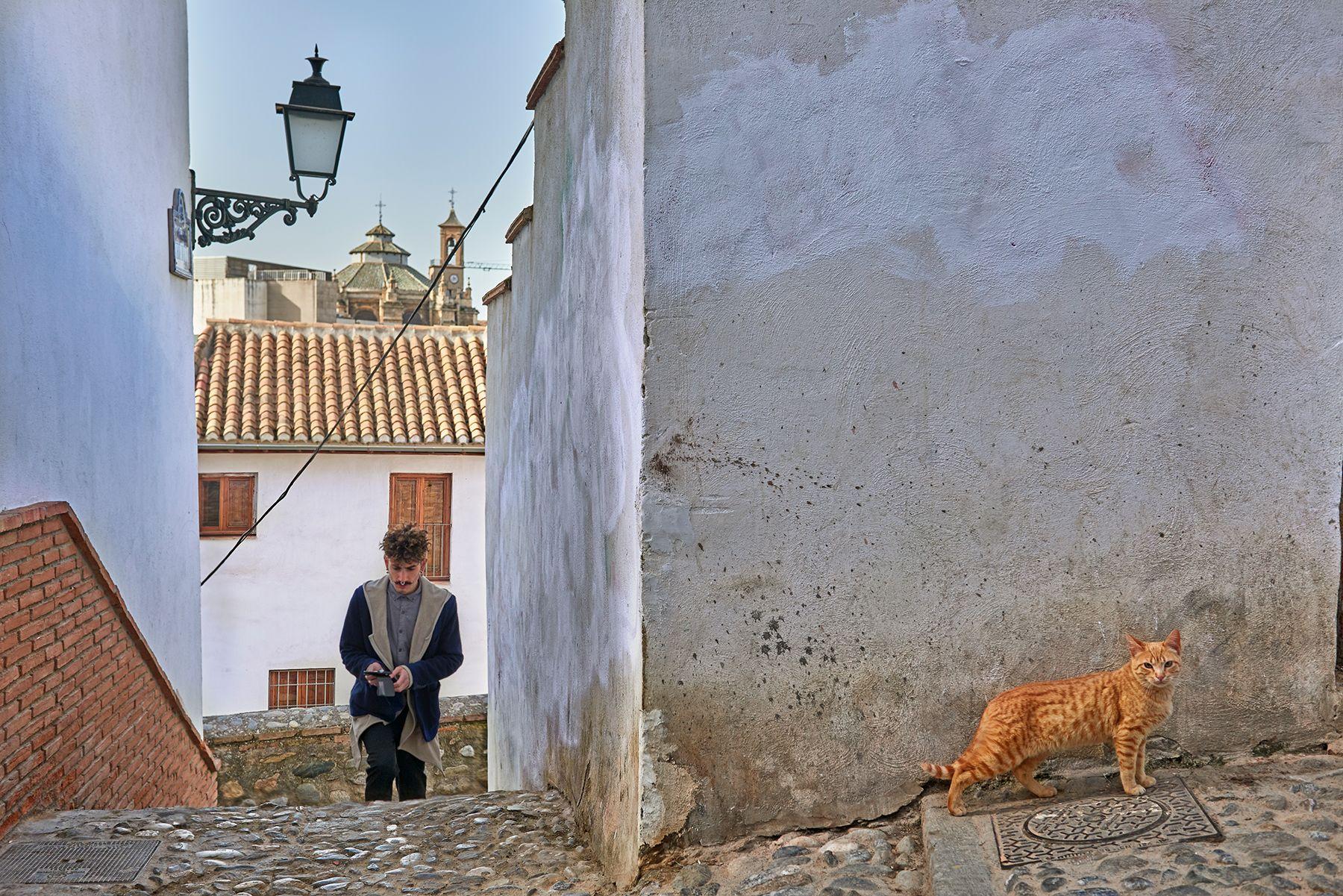 Felis silvestris catus o gato del Albaycín