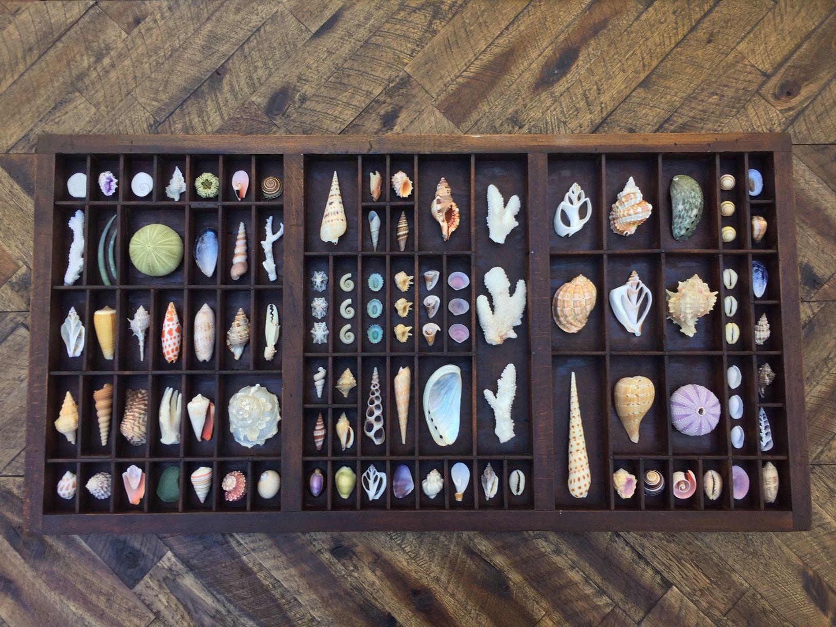 OOAK Vintage/Antique Seashell Printers Tray/Drawer Display #printertray