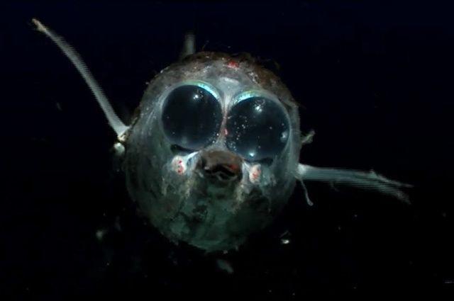 Strange fish 39 39 deep sea fish deepsea sea fish for Weird deep sea fish