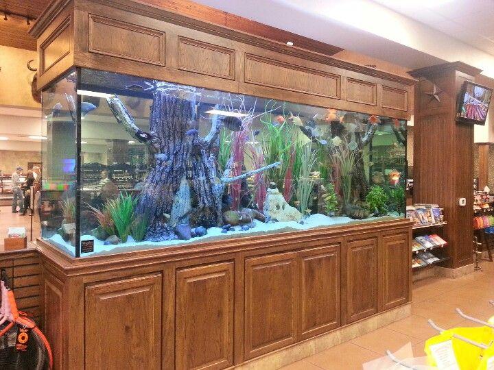BIG ASS CICHLID TANK   fish tanks   Pinterest   Aquariums ...  BIG ASS CICHLID...