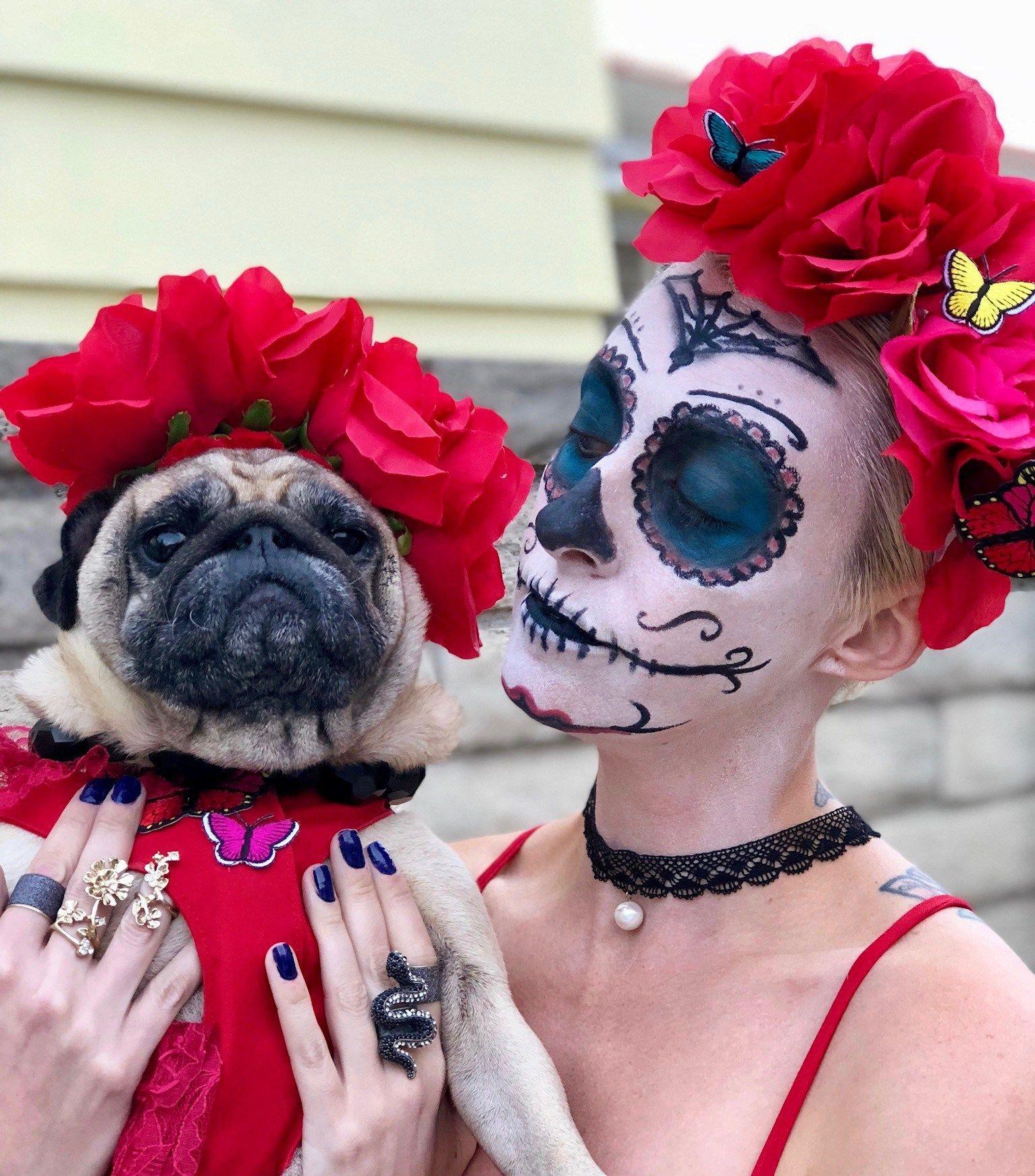 Dog halloween costumes, Dog halloween, Dog
