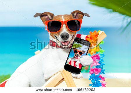 jack russelel honden afbeeldingen | Funny From Shots Vacation Stock Photos, Funny From Shots Vacation ...