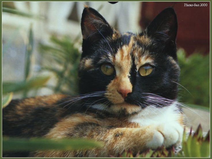Antideclawing poster Declawing cats, Humane education