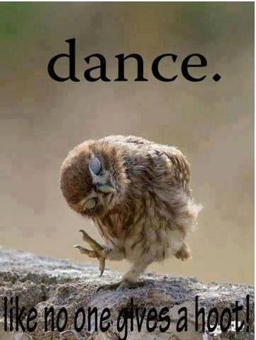 Dance Funny Quotes Quote Dance Lol Funny Quote Funny Quotes Owl Humor Animals Beautiful Cute Animals Cute Animal Photos