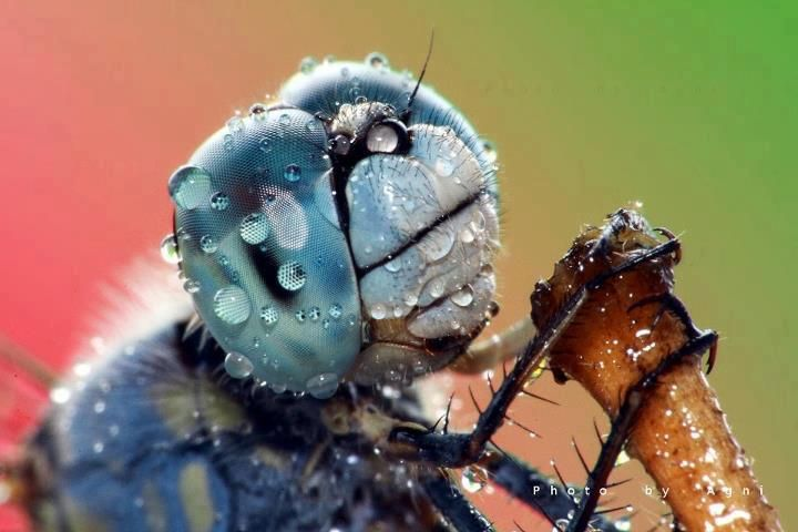 Wk And Closeup Of Compound Eyes Dragonfly Dragon In The - 24 detailed close ups of animal eyes