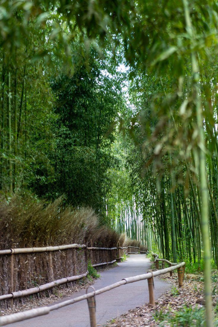 Know Before You Go Arashiyama Bamboo Grove in Arashiyama, Kyoto, Japan