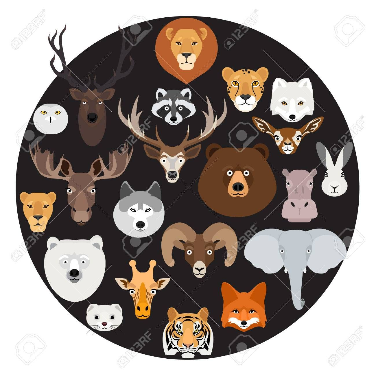 Stock Photo Caras De Animales
