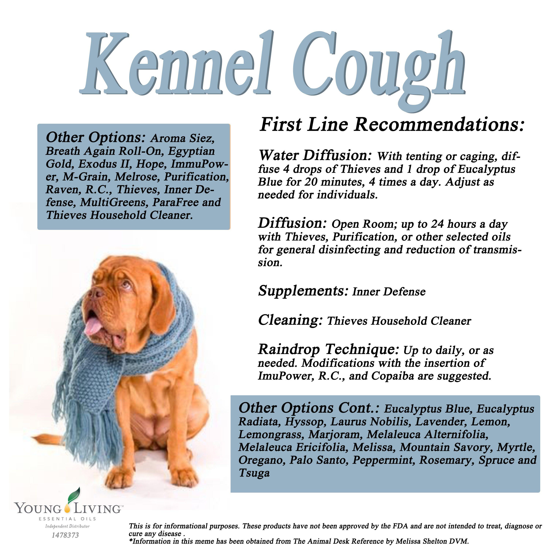Pin On Dogs/Animal Oils