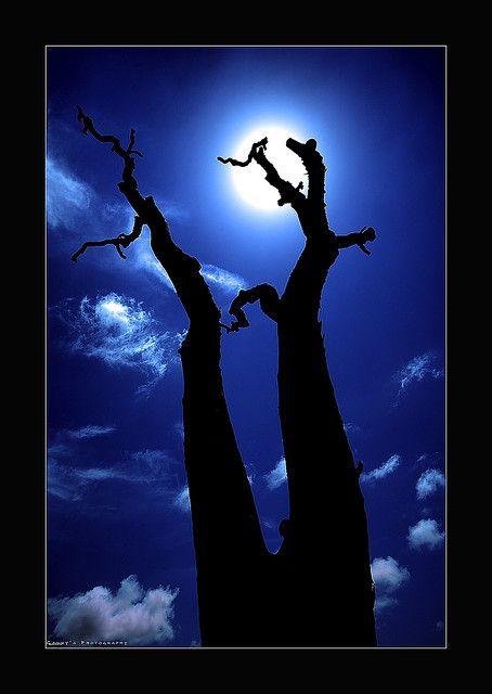 Ghost Tree by Garry - www.visionandimagination.com, via Flickr