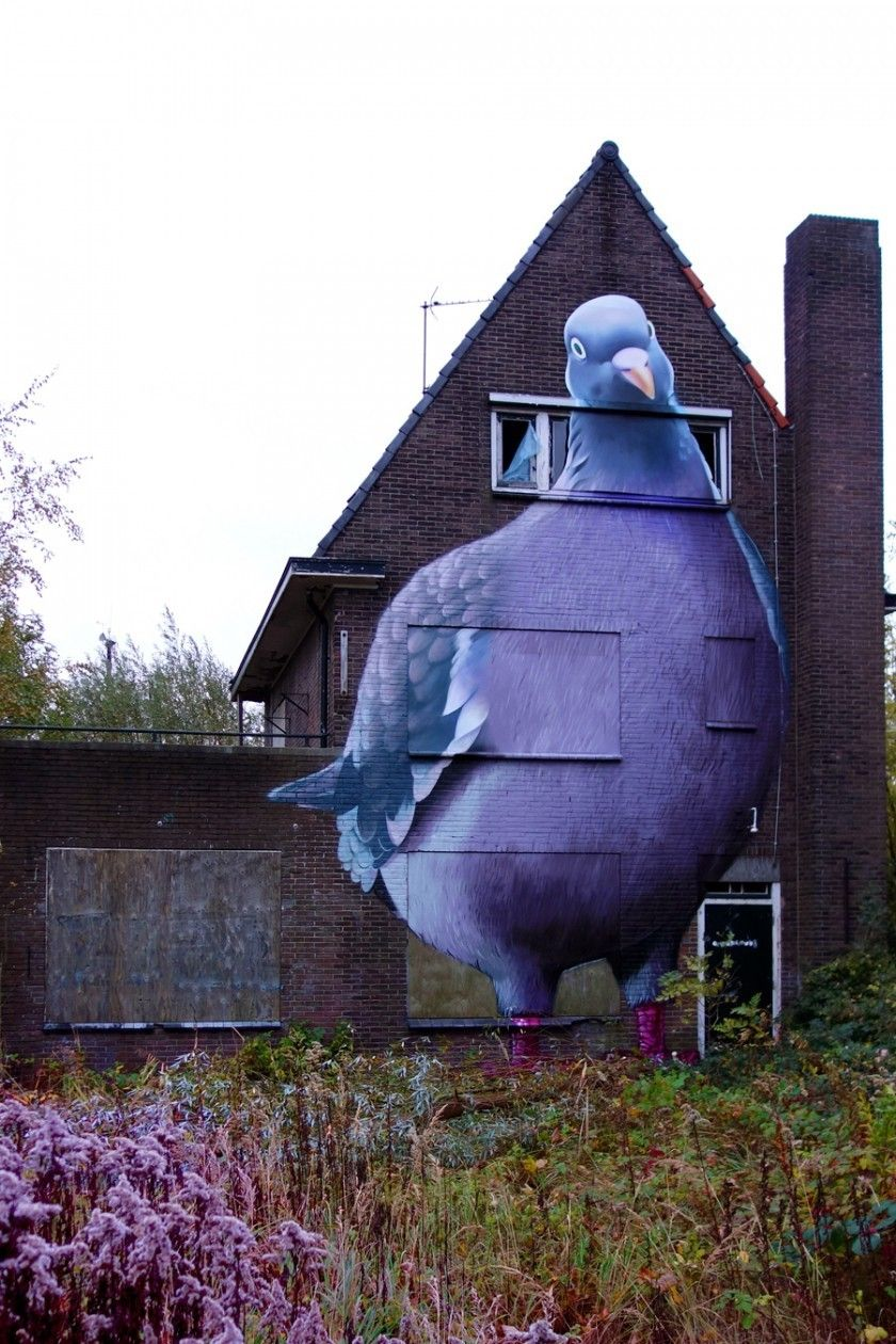 A giant pigeon on the side of a barn! Epic.