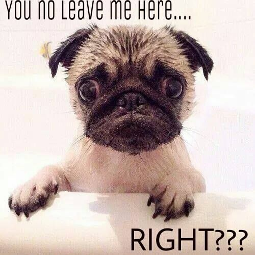 Funny Pug Dog Meme Pun Lol Pugs Funny