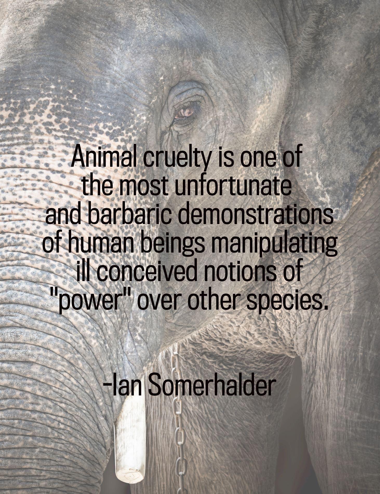 Animal Cruelty Quotes Pinmiranda Van Den Bosch On Quotes  Pinterest