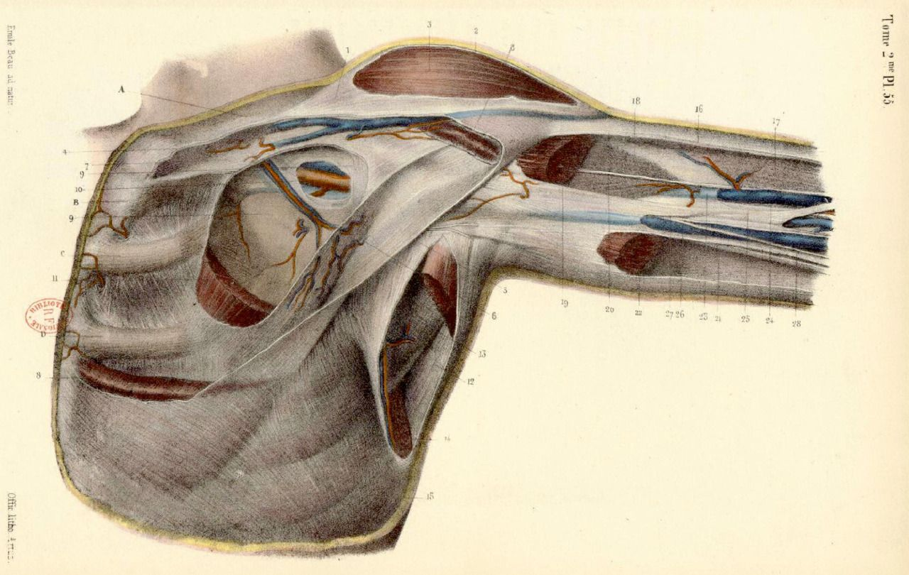 BONAMY, Constantin (b.1812), Paul BROCA (1824-1880 https://www ...