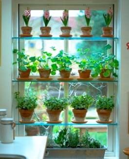 Grow Great Herbs Indoors On Window Plant Shelves The Directions