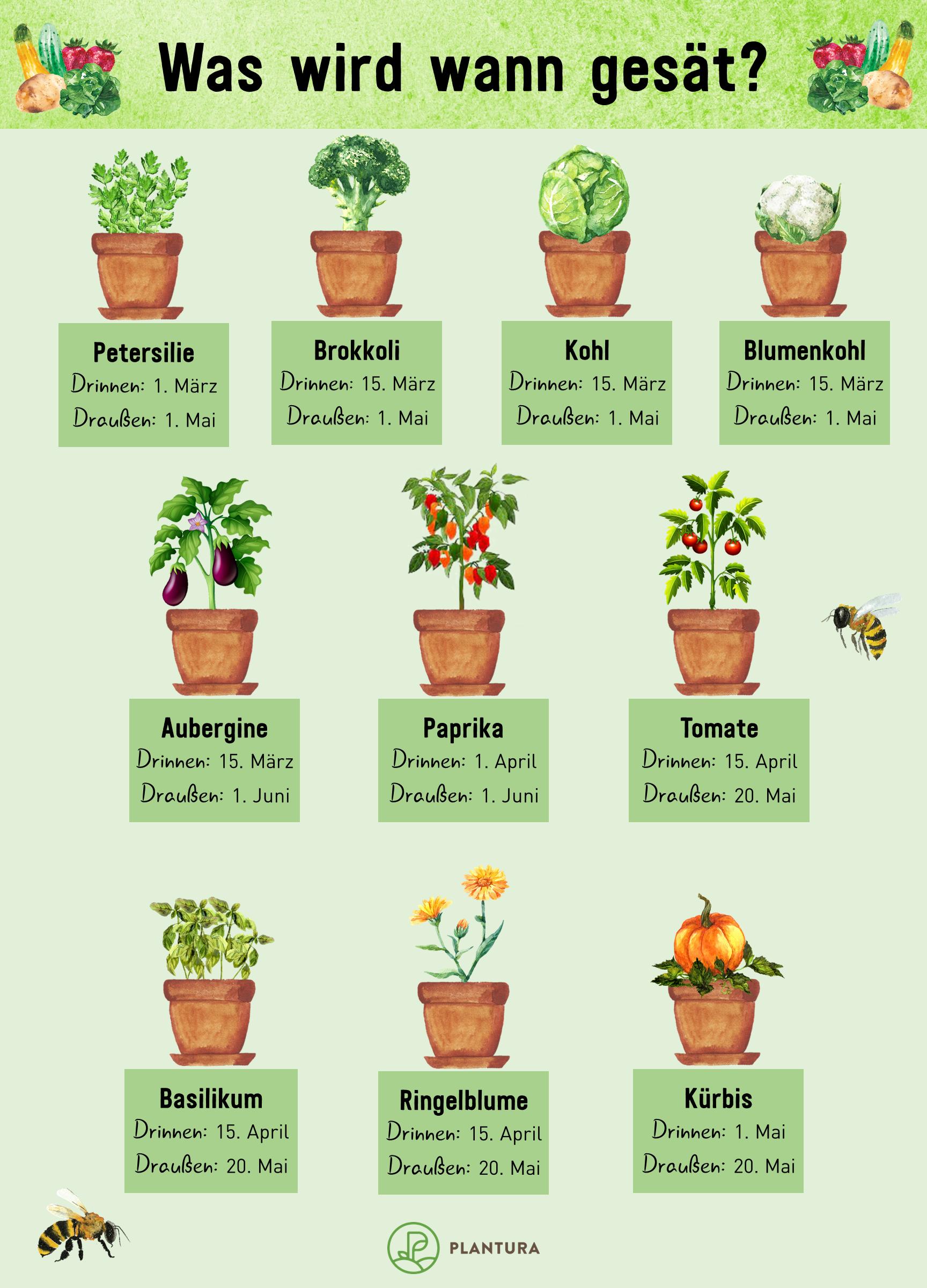 Aussaatkalender Wann wird was ausgesät is part of Plant pot diy, Creative gardening, Garden design layout, Vegetable garden, Plants, Garden design - Für eine erfolgreiche Aussaat ist der Zeitpunkt entscheidend  Wir haben für Sie zusammengetragen, wann was ausgesät werden muss