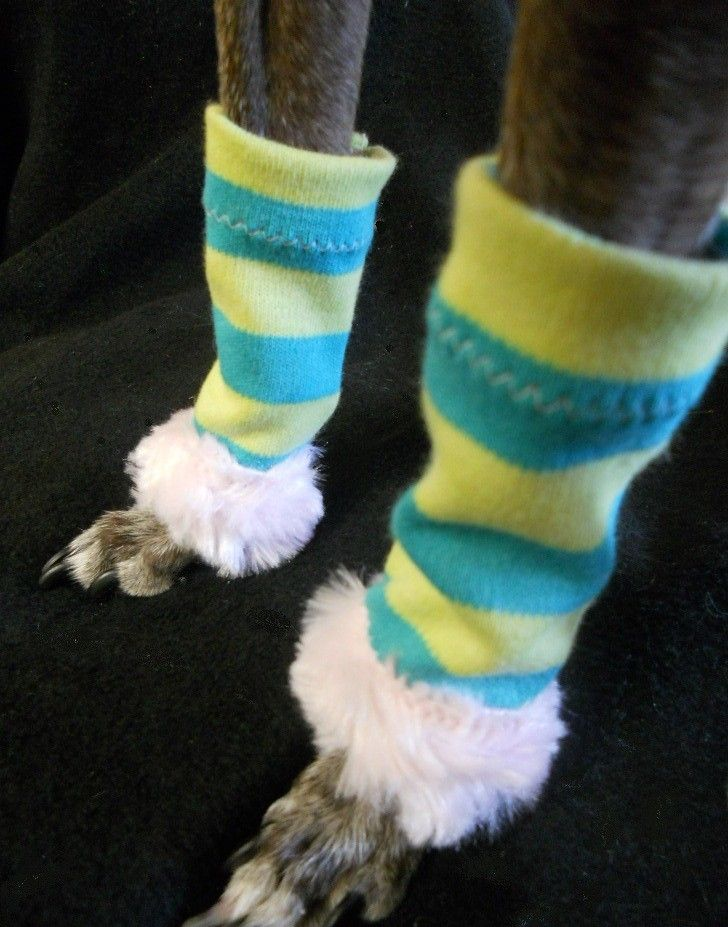 Dancewear for Dogs striped leg warmers for dogs by hatz4brats