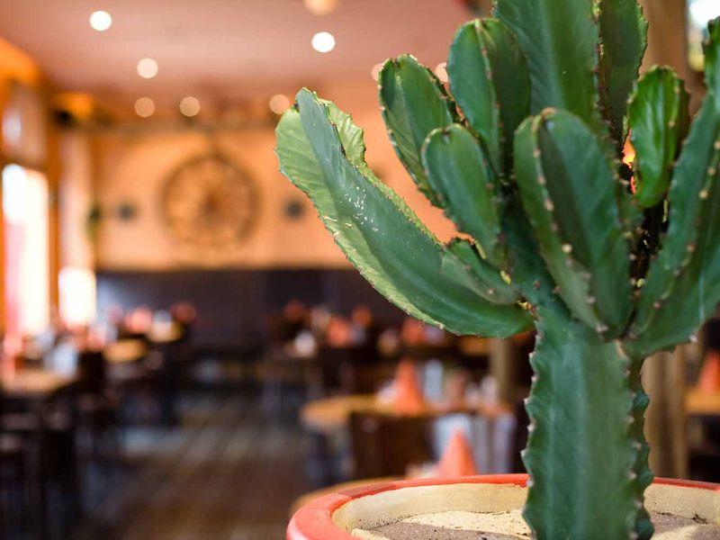 Restaurant HAZIENDA @ carathotel Frankfurt Airport - Steaks, Spareribs and more!