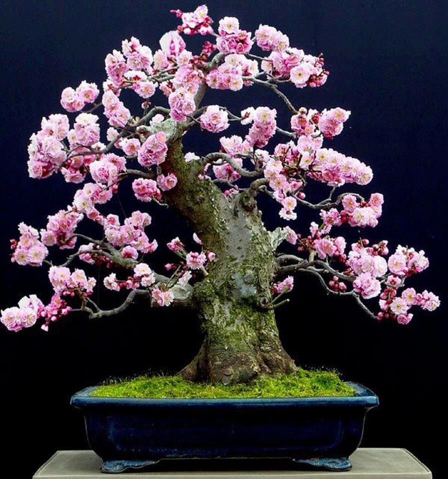 Just Pink Flower Bonsai Bonsai Trees Pinterest Bonsai Plants
