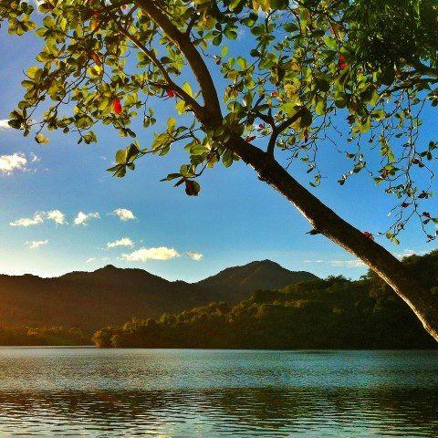 Bajo el palo de almendro. Lago Patillas.