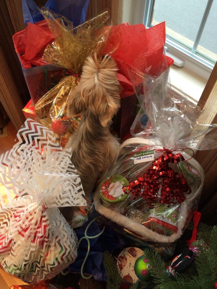 Morkie Bailey verifying everyone has a gift.