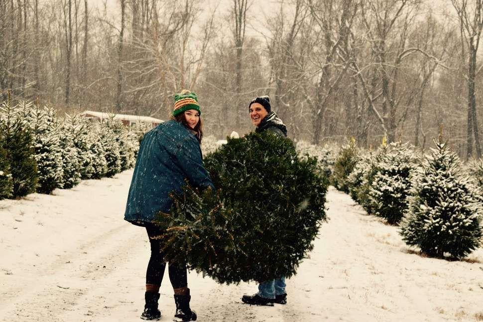 The Best Christmas Tree Farms Near NYC Christmas tree