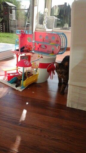 Petit chat qui se promène près des monster high dans leur bateau.