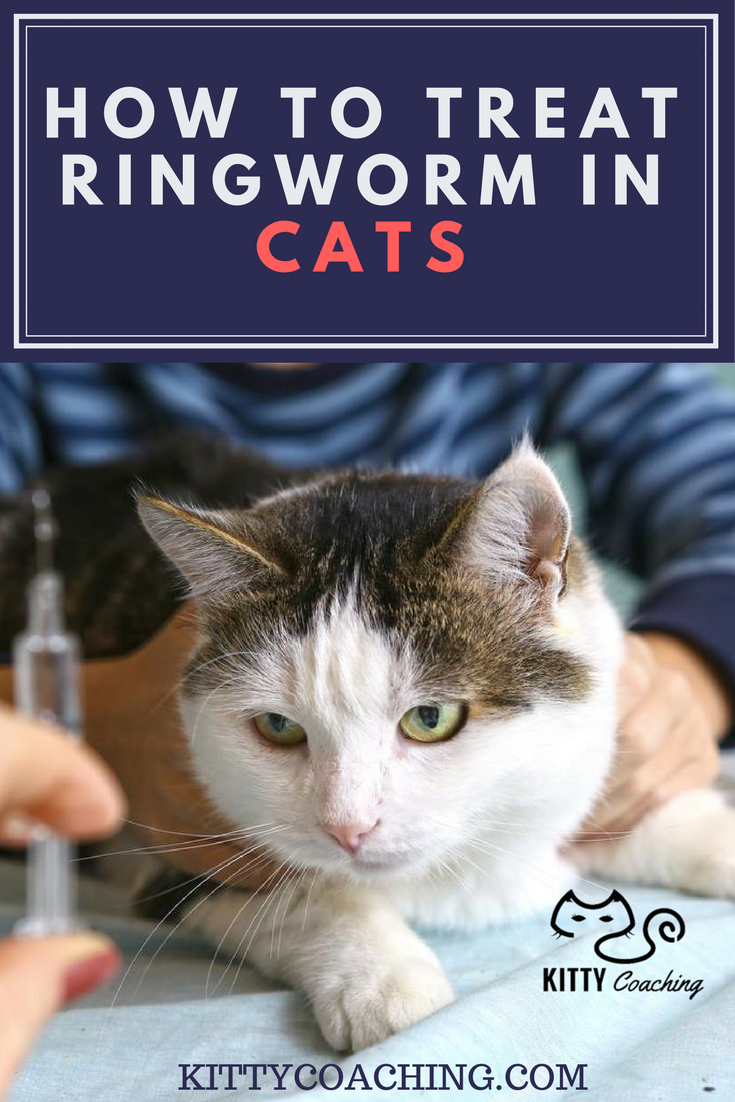 How To Treat Ringworm In Cats 2018 Ringworm In Cats Cat