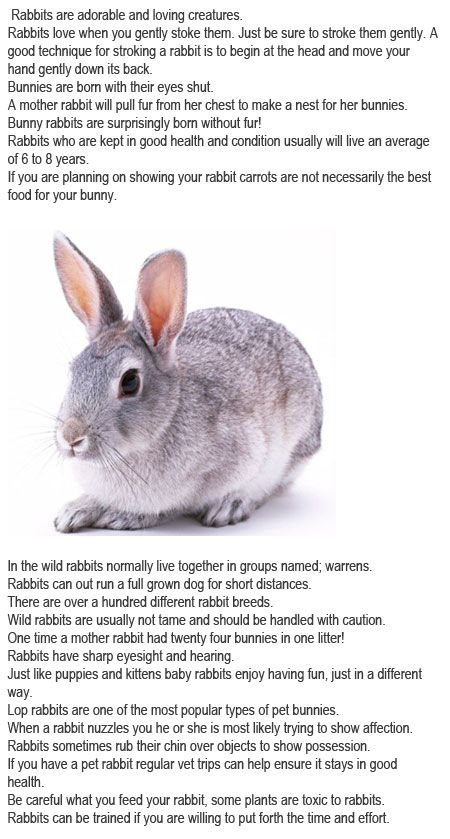 Facts about bunnies for kids httpfirstchildhoodeducation