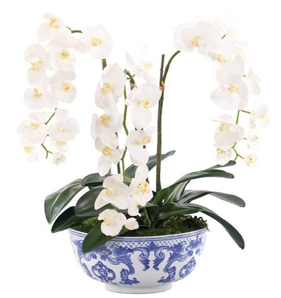 Flowers Silk Orchids Arrangements Orchid Arrangements Flower Arrangements