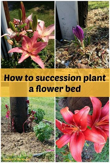 How To Succession Plant A Flower Bed Succession Planting Flower