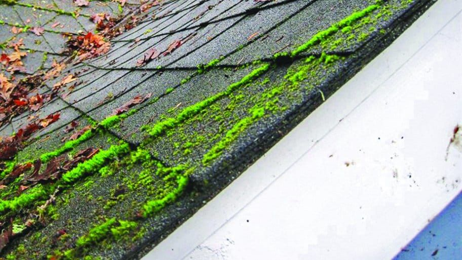 What Does Roof Cleaning Cost? Roof cleaning, Cleaning