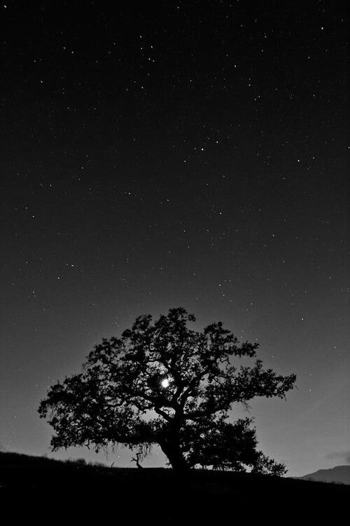 Sole Tree Stands In The Night Hiding The Moon Black And White Tree Black And White Photography Photography