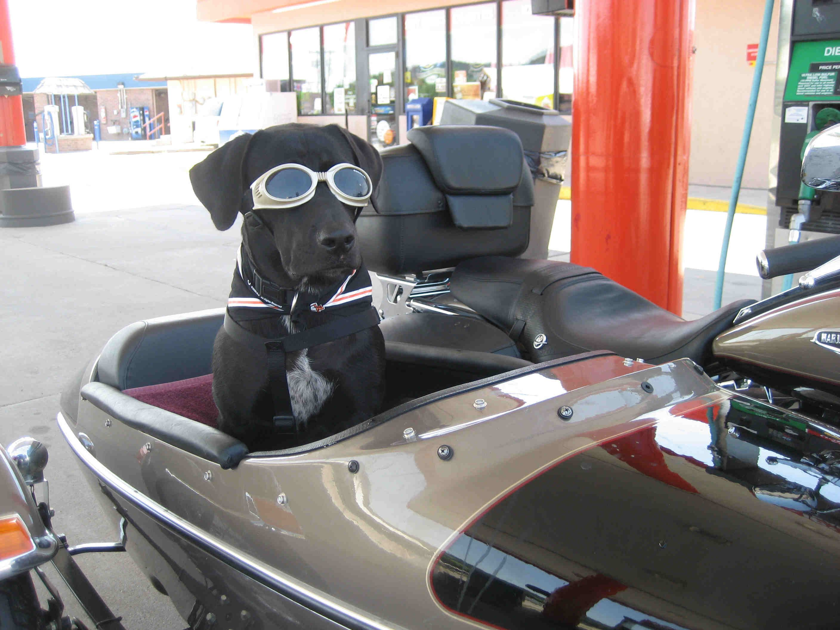 He S Got His Doggles On And Ready To Ride Biker Dog Touring Bike