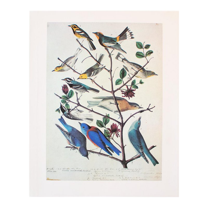 1966 Birds Of America Vintage Print By Audubon Birds Of America